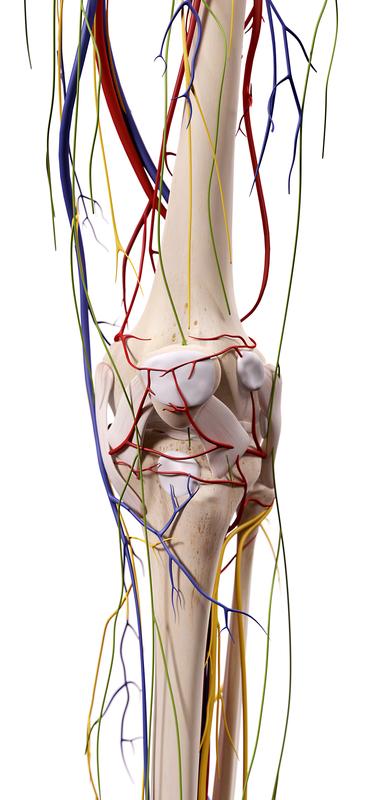 Genicular Nerve Blocks Trinity Surgery Center 1 - Genicular Nerve Blocks